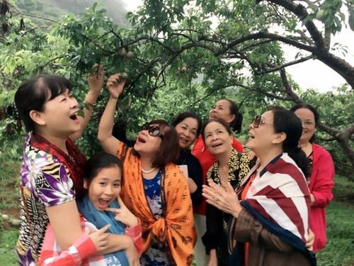 Tháng 5, trải nghiệm hái mận trên cao nguyên Mộc Châu